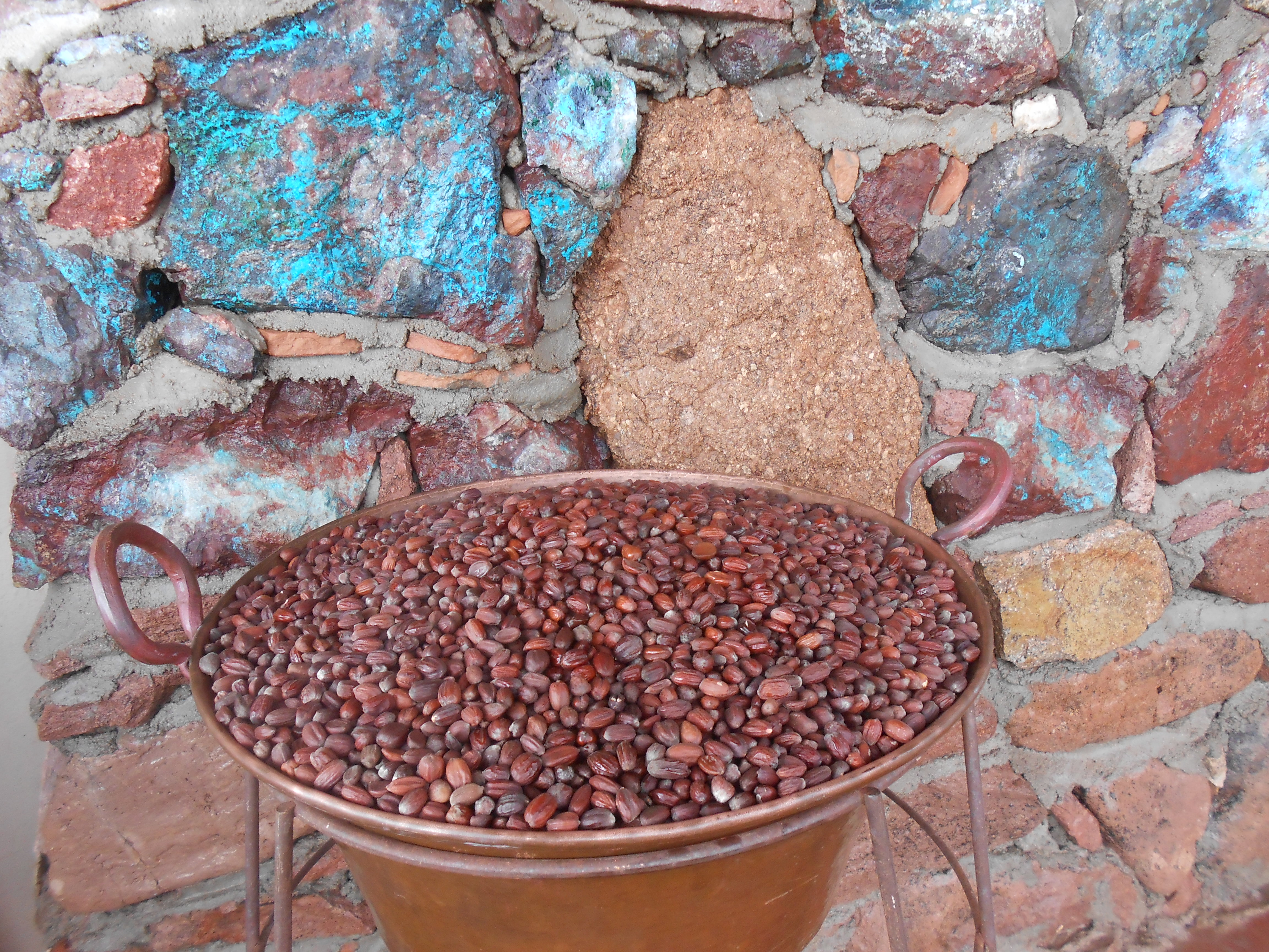 Copper Pot Full of Wild Harvest Jojoba Beans
